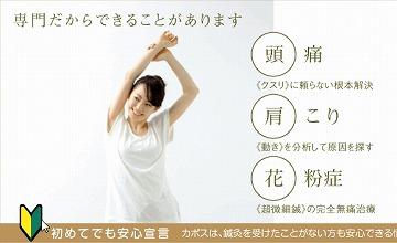 shinagawa-a_kapos.jpg